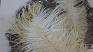 or pale, butter yellow feathers