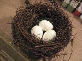 Before nest, scary green moss and bright white eggs.