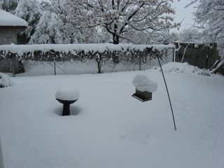 """Snoooow! 12-1/2"""" yesterday. Pretty amazing for our neck of the woods!"""