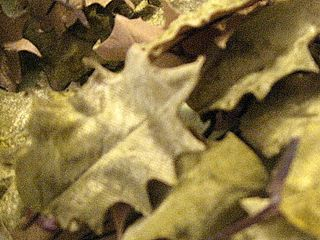 velvet holly leaves for sale on my etsy.
