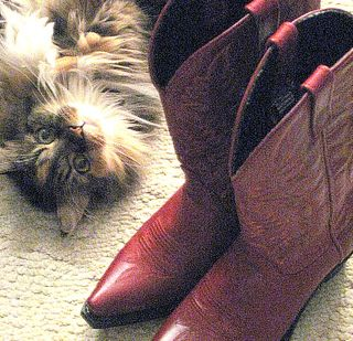 a little yapping cat likes Mom's new red boots!